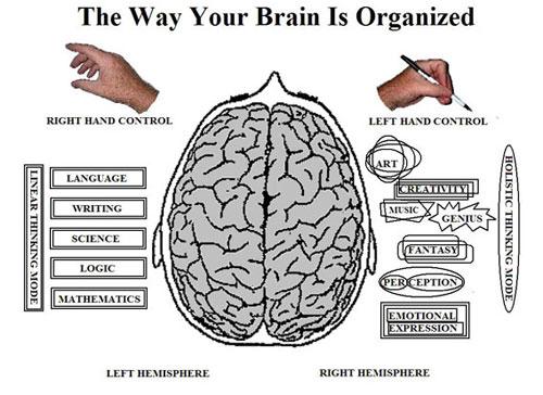 brainjpg2